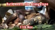 Ruth meets the Orangutans